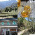 セミナー「茶旅のみやげ話~台湾高山茶の歴史~」